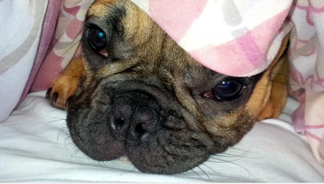 Pies - radość czy obowiązek?